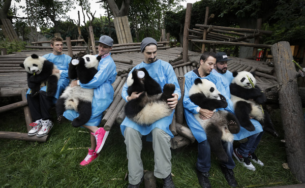 BSB & Pandas in Chengdu, China