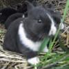 tori231 avatar