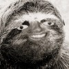 harlow avatar