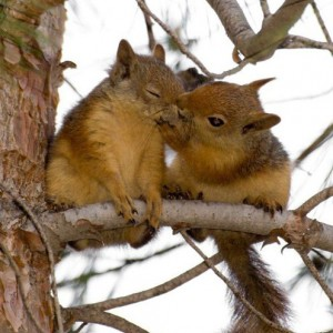 squirrelove avatar