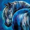 Bluehorse avatar