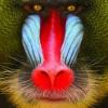 JZ avatar