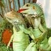 LizardWiz avatar