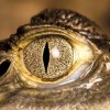 Swamp Girl avatar