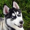 Aethryix avatar