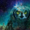 .OvO. avatar