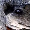 SeEd avatar