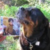 tsrottweilers avatar