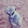 Babunga avatar
