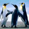 yo GuR1 D32T1nY avatar