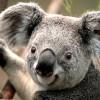 panda3 avatar