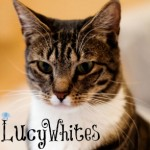lucywhites avatar