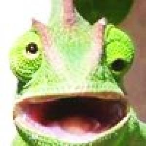 designforlove avatar