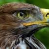 falcon26 avatar