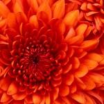madelinepointon13 avatar